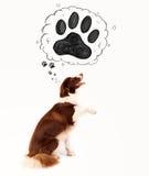 与爪子的逗人喜爱的博德牧羊犬在她的头上 免版税图库摄影