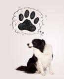 与爪子的逗人喜爱的博德牧羊犬在她的头上 库存照片