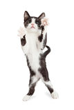 与爪子的逗人喜爱的嬉戏的小猫在空气 库存图片