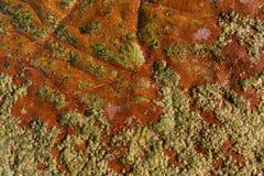 与爬行青苔的红色海洋岩石 库存照片