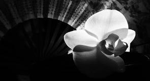 与爱好者的由后面照的兰花 免版税库存照片