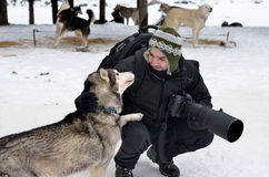 与爱斯基摩狗的专业摄影师戏剧 免版税库存照片