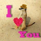 与爱的词的滑稽的卡片 库存照片