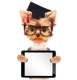 与片剂个人计算机的毕业的狗 免版税库存图片