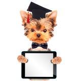 与片剂个人计算机的毕业的狗 免版税库存照片