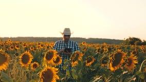 与片剂的商人审查他的领域用向日葵 农业企业概念 农夫在开花走 股票录像