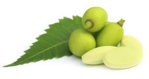 与片剂的医药neem果子 免版税库存照片