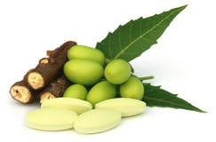 与片剂的医药neem果子 库存照片