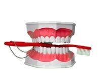 与牙刷的下颌在他的嘴 免版税图库摄影