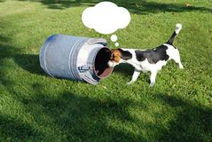 与牛奶罐头的狗 免版税库存照片