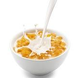 与牛奶飞溅的玉米片 图库摄影