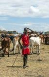 与牛的马塞语玛拉 库存照片