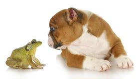 与牛蛙的逗人喜爱的小狗 免版税库存图片