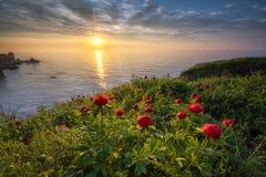 与牡丹的海景 免版税库存图片
