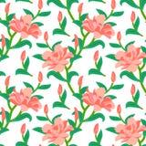 与牡丹花的花卉无缝的传染媒介样式 库存图片