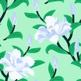 与牡丹花的花卉无缝的传染媒介样式 库存照片