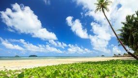 与牵牛花的海滩 图库摄影