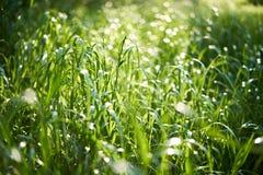 与特写镜头的新鲜的绿色夏天草 晒裂 软绵绵地集中 抽象自然夏天背景 环境概念,草坪 库存照片