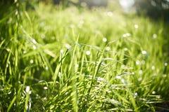 与特写镜头的新鲜的绿色夏天草 晒裂 软绵绵地集中 抽象自然夏天背景 环境概念,草坪 免版税库存照片