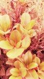 与特别植物的自然 免版税库存照片