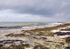 与狂放的波浪的法国在海滩的海岸和海草 图库摄影