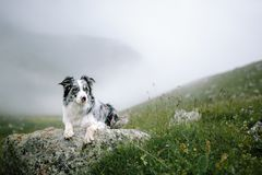 与狗博德牧羊犬的美好的风景 免版税库存照片