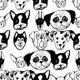 与狗品种的无缝的样式 牛头犬,爱斯基摩,阿拉斯加的爱斯基摩狗,猎犬,短毛猎犬,长卷毛狗,哈巴狗, Shar裴 向量例证
