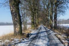 与狗的冬天风景 免版税库存照片