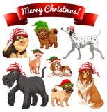 与狗的圣诞节题材在矮子帽子 免版税库存图片
