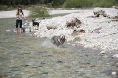 与狗的夏天喜悦在水中 免版税库存图片