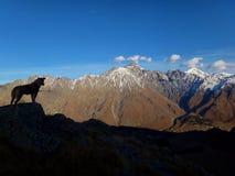 与狗的大高加索山脉风景 免版税图库摄影