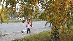 与狗的妇女步行 股票视频