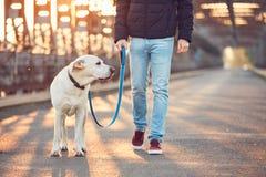 与狗的早晨步行在日出 免版税库存照片