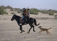 与狗的海滩骑马 免版税库存照片