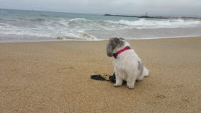 与狗的海滩 免版税库存照片