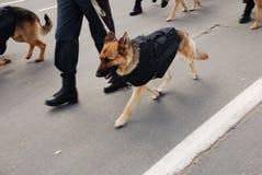 与狗的警察 免版税库存照片