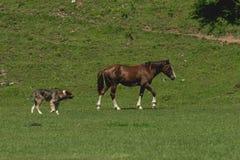 与狗的马在草甸 免版税图库摄影