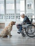 与狗的高兴的不适的老女性消费的时间 免版税库存图片