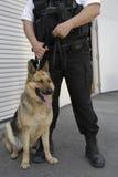 与狗的治安警卫 免版税库存照片