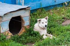 与狗窝的狗 免版税图库摄影