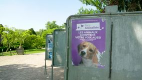 与狗面孔的海报在绿色晴朗的公园竞选 股票录像