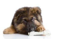 与狗骨头的小狗。 库存图片