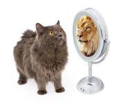 与狮子反射的猫在镜子 免版税库存图片