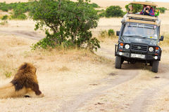 与狮子的徒步旅行队,非洲 免版税库存图片