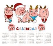 与猪的日历在圣诞节服装 免版税图库摄影
