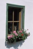 与猫和大竺葵的窗口 免版税库存照片