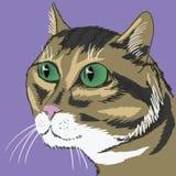 猫 库存例证