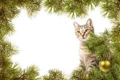 与猫的圣诞卡 免版税库存照片