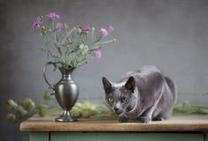 与猫的静物画 免版税库存照片