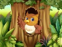 与猫头鹰的一个树凹陷 免版税图库摄影